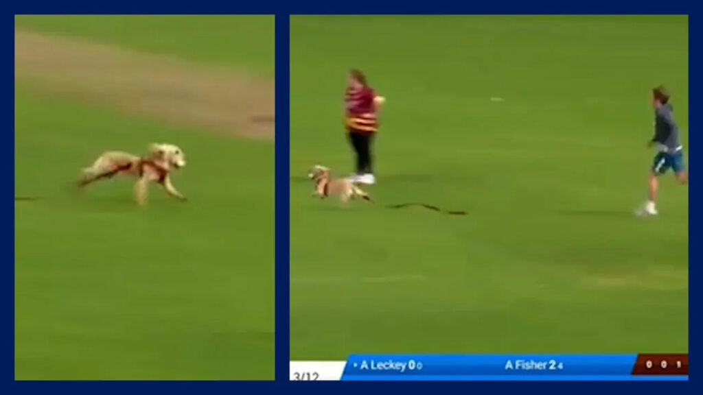 Dog stands out in a hilarious incident during the semi-final T20 for women in Ireland.  Photo Twitter